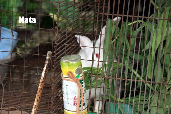 15.眼紅的大白兔.jpg