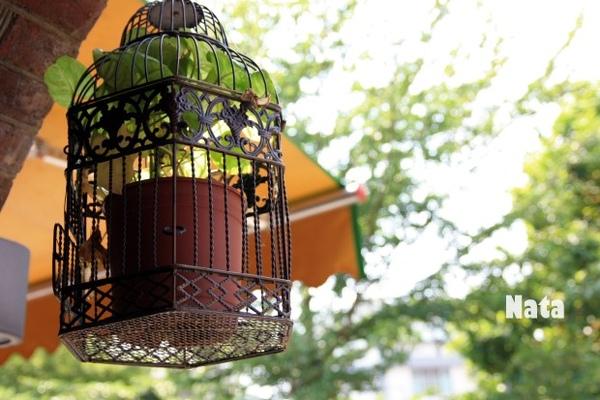 18.散步老街發現的鳥籠盆栽.jpg