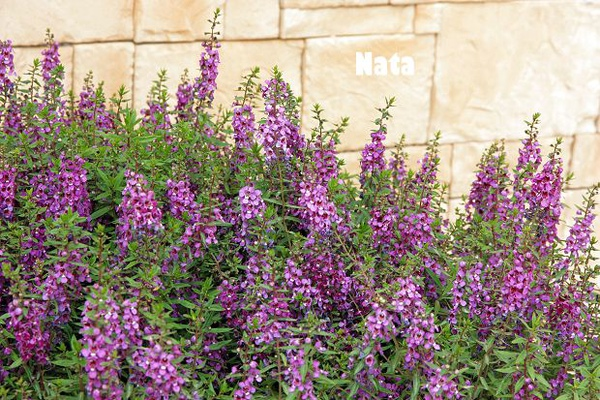 04.庭院裡的花.jpg