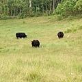 04.有牛隻就像是個牧場呀.jpg