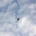 05.天空有著蜘蛛在爬行.jpg