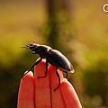 23.讓甲蟲停在手指.jpg