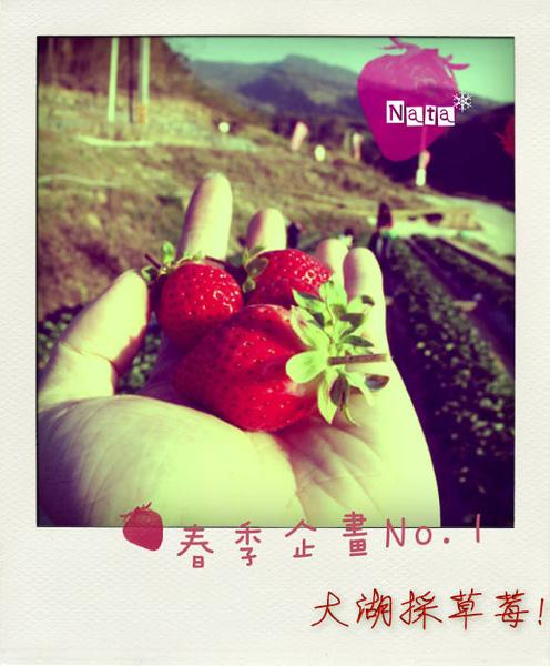 01.大湖採草莓去囉!.jpg