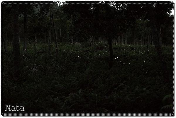 05.一開始還沒那麼多螢火蟲.jpg