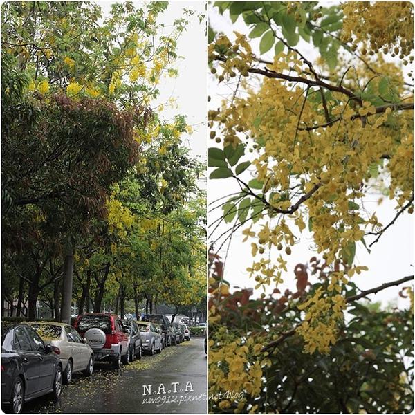 02.延街下起黃雨.jpg
