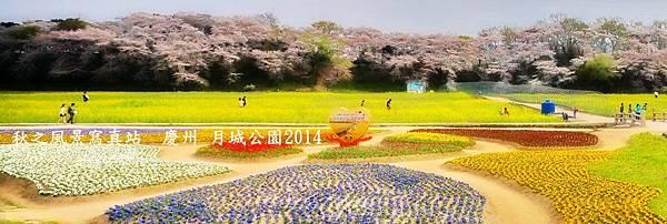 鎮海慶州櫻花2014_01.JPG