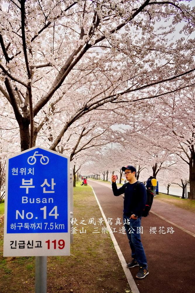 三樂公園櫻花路13