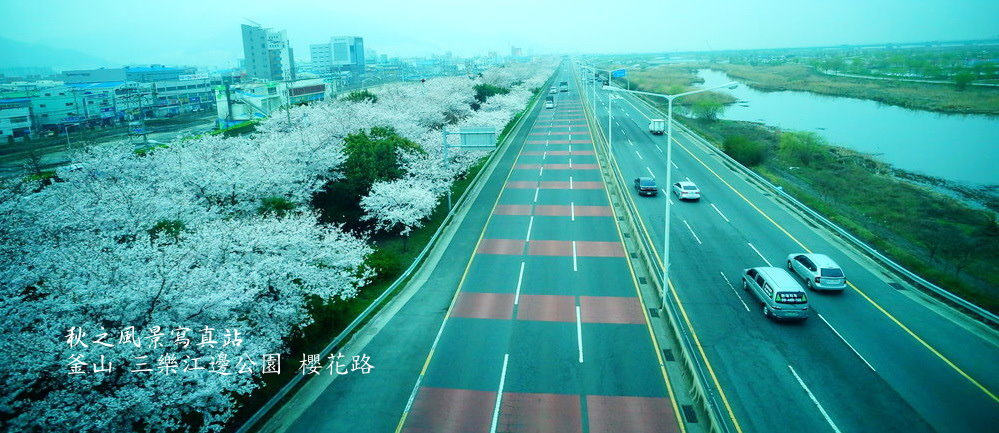 三樂公園櫻花路01