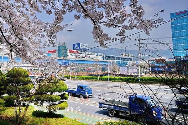 三樂公園櫻花路17