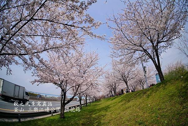 三樂公園櫻花路16