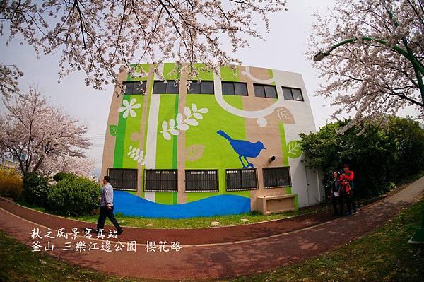 三樂公園櫻花路15