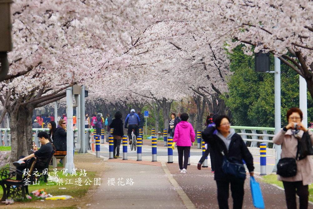 三樂公園櫻花路09