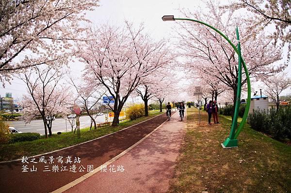 三樂公園櫻花路14