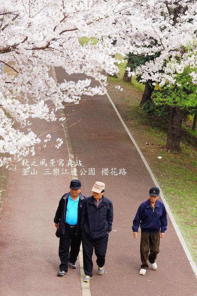 三樂公園櫻花路08