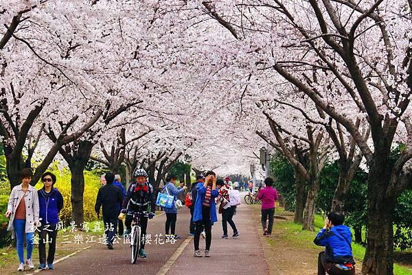 三樂公園櫻花路10