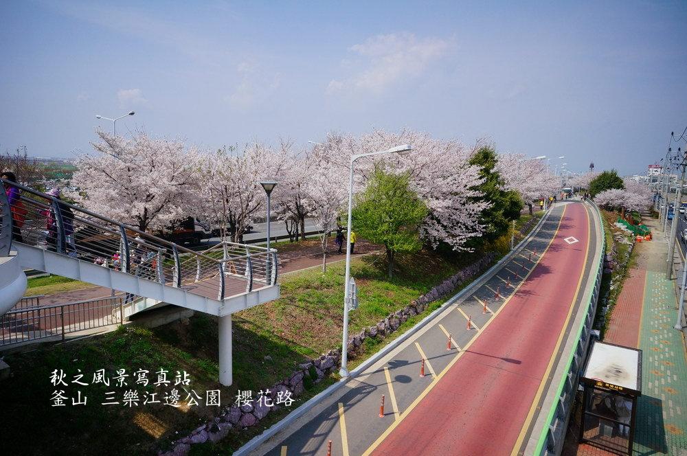 三樂公園櫻花路02