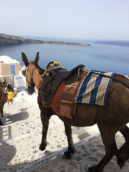 Donky-Santorini-Oia-驢子.jpg