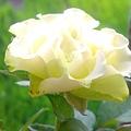 201108115308.jpg