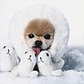 20111113-別感冒,別感冒,別感冒,請把自已包得像隻北極熊吧。