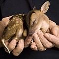 20120116-這張照片,讓我想到「我不願讓你一個人」不過,牠明明是一隻鹿。