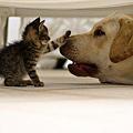20120121貓:你乖乖的~才發壓歲錢給你噢。