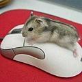 20120419-...嗯,我知道你是「滑鼠」了,可以下來了嗎?