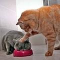 20120705-現在還會餓嘛你?