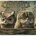 20120730-就像張震跟張震嶽~貓頭跟貓頭鷹真是兩件事