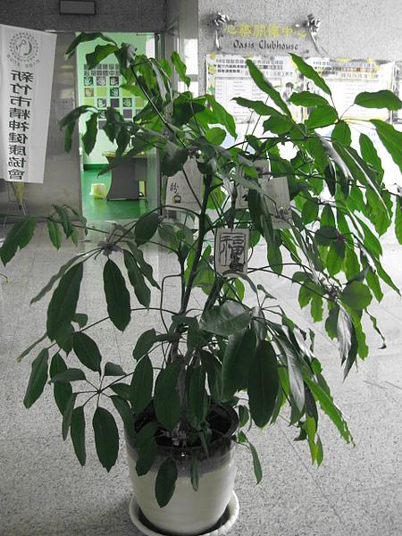 盆栽 012.jpg