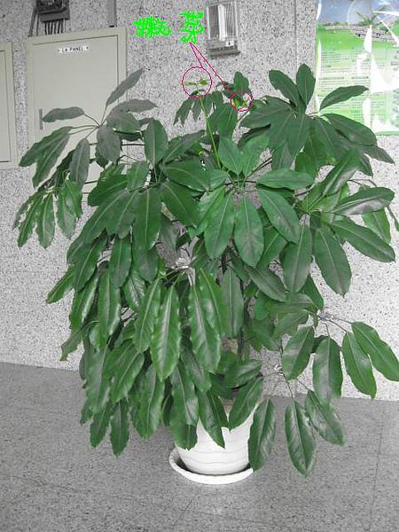 盆栽 001.jpg