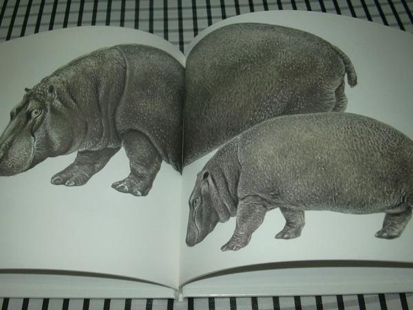 動物親子4.jpg