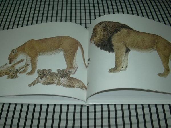動物親子5.jpg