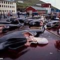 丹麥的暴行4