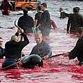 丹麥的暴行9