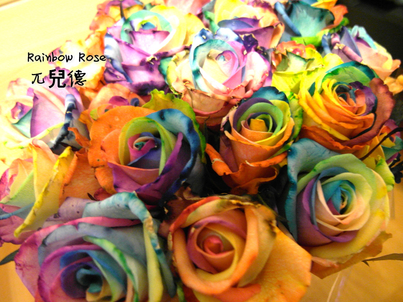 彩虹玫瑰2