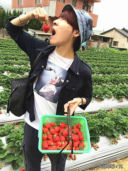 大直草莓園(8)