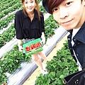 大直草莓園(1)
