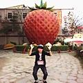 大直草莓園(5)