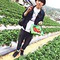 大直草莓園(6)