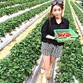 大直草莓園(7)