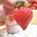 大直草莓園(21)