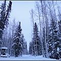 狗拉雪橇場  要穿過這片樹林才會到達.jpg