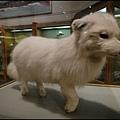 費爾班極地博物館6.jpg