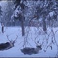 聖誕老人屋10屋外養了兩頭麋鹿.jpg