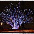 1020223  燈會裡的樹