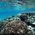 帛琉 11.png