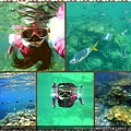 帛琉珊瑚.jpg