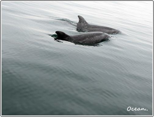 鳥島     遇海豚.JPG