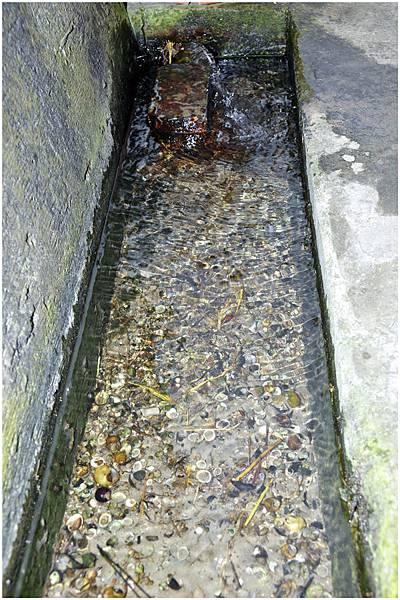看到水溝裡面的水很清澈1.jpg
