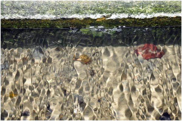 看到水溝裡面的水很清澈3.jpg